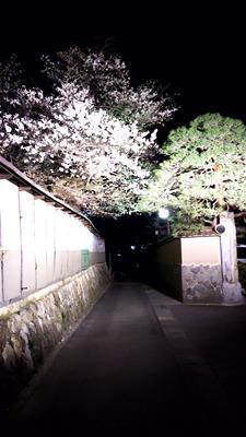 飯坂温泉の夜桜