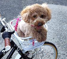 自転車のカゴにわんこ