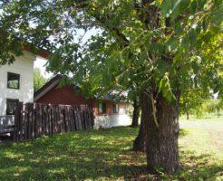 かわいい家と木