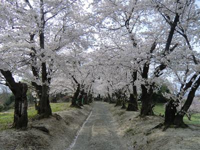 橿原神社1