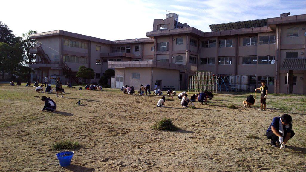 校庭の草むしり