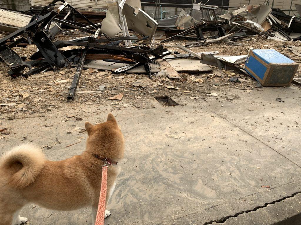 ペットと災害