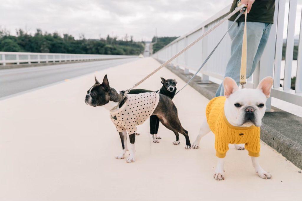 犬と冬散歩