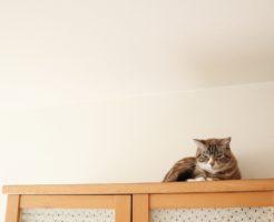 猫と高い家具