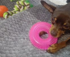 犬とおもちゃ